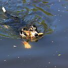 Swimming dog with stick by turniptowers