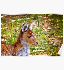 Inner Peace, Yanchep National Park Poster