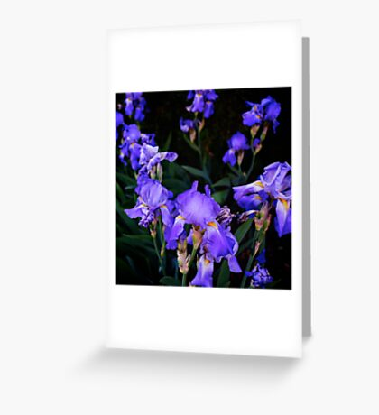 Irises for spring beauty Greeting Card