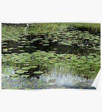 Lily Pads and Aquatic Plants Poster