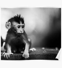 monkey baby poster