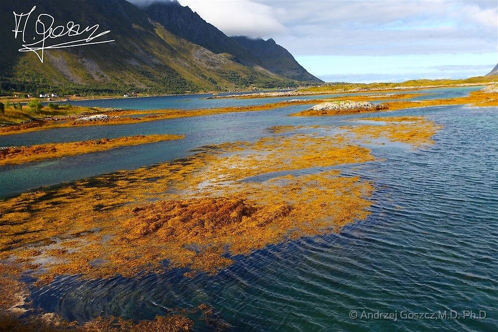 Gimsoy bridge . Lofoten - one of the 20 most beautiful places on earth. © Doctor Andrzej Goszcz. #Doctor Andrzej Goszcz Photography. by © Andrzej Goszcz,M.D. Ph.D