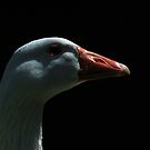 Portrait of domestic goose by turniptowers