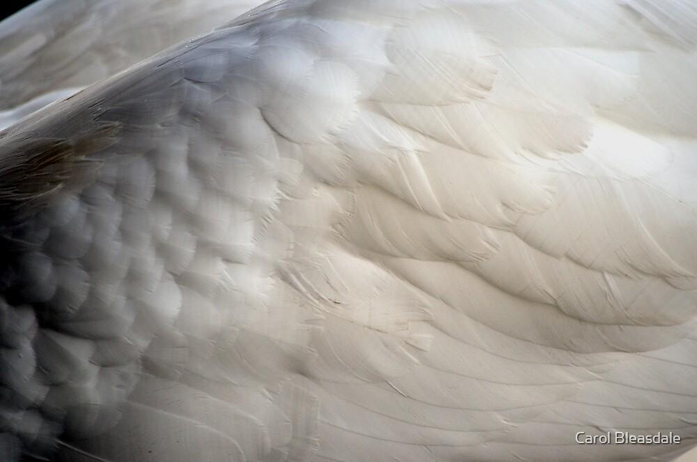 White by Carol Bleasdale