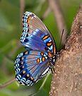 Blue Butterfly by Sandy Keeton