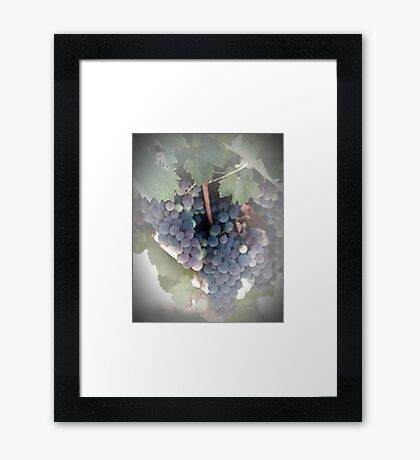 A Beautiful Bunch of Grapes Framed Print