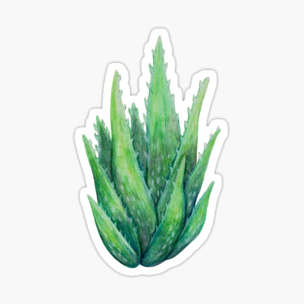 Aloe Plant Sticker