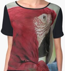 Plotting Parrot Women's Chiffon Top