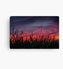 Ohio Cornfield After Sunset Canvas Print