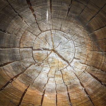 The Old Log Cushion. by Terrain75