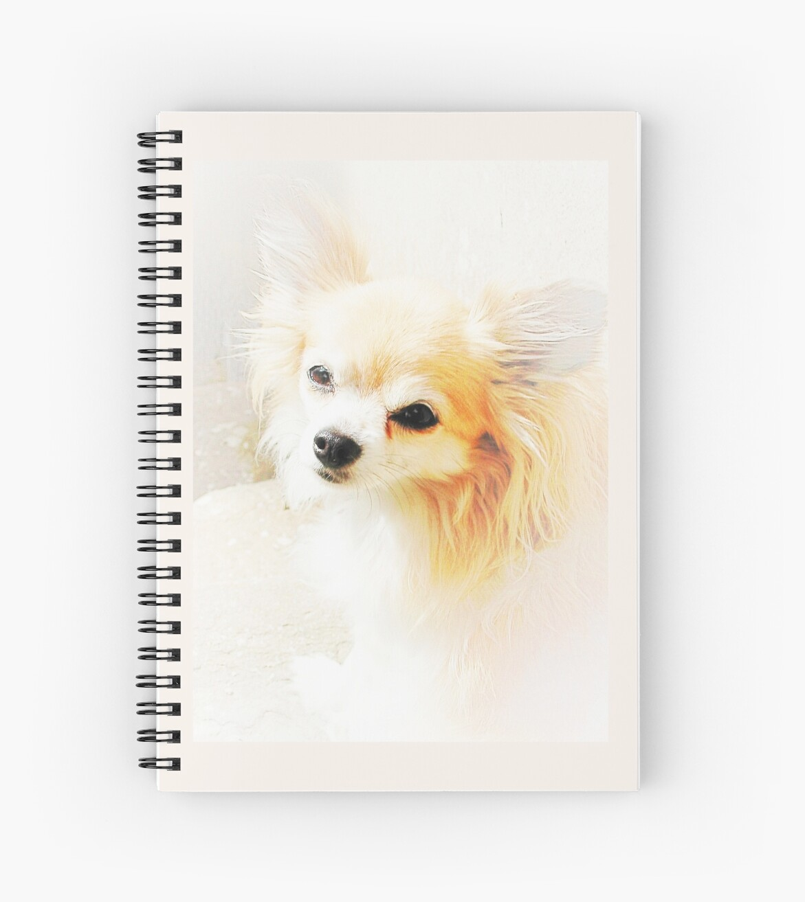 Long Haired Chihuahua by Dorothy Berry-Lound