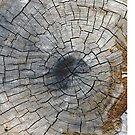 Wood, nature by artherapieca