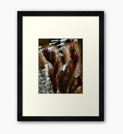 Afternoon Ferns Framed Print
