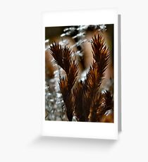 Afternoon Ferns Greeting Card
