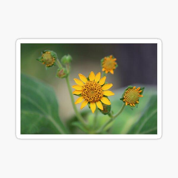 Yaćon Flower   Sticker