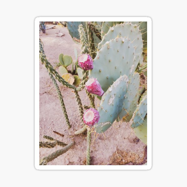 Blooming Cactus Sticker