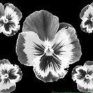cinq fleur by bywhacky