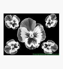 cinq fleur Photographic Print