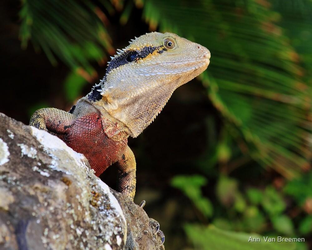 """Australian Water Dragon: """"Australian Water Dragon"""" By Ann Van Breemen"""
