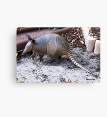 What's THIS in the Yard?  Helllloo, Armadillo!!   Canvas Print