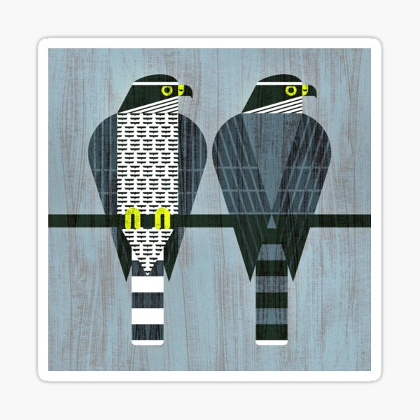 Northern Goshawk Sticker