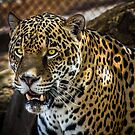 Mr. Leopard by Randy Turnbow