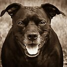 PitBull by Randy Turnbow