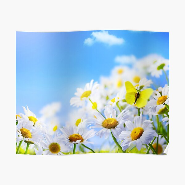 yellow butterfly on a field daisy, in a field under a blue sky Poster