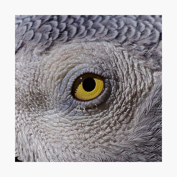 The Eyes have it Number 1 Photographic Print