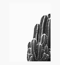 Black cactus Photographic Print