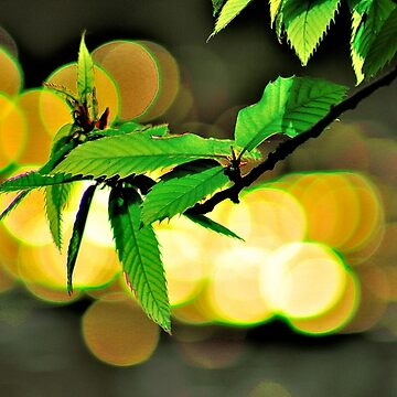 Leafs by NaturesEarth