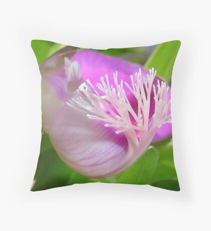 Pink Polygala Myrtifolia in Macro with Green Background  Throw Pillow
