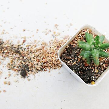 green cactus in white pot and spill soil by newbietraveller