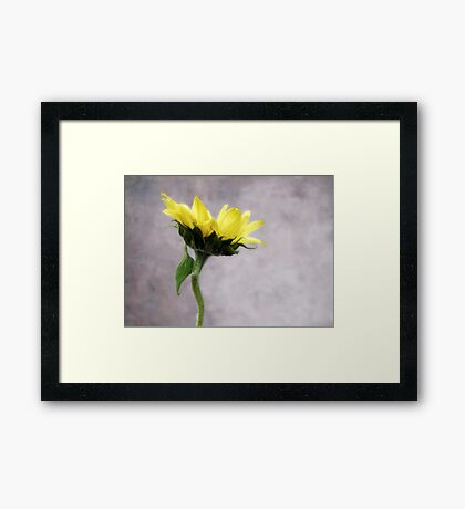 Sunflower #1 Framed Print