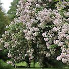 Bushy Flowering Bush Tree Thing by photolodico