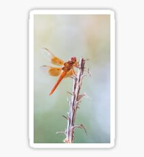 Flame Skimmer on Agave Sticker