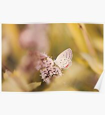 Nature Peeking Small Butterfly Poster