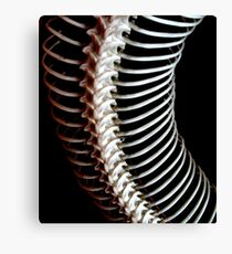 spine Canvas Print
