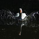 Goose landing by turniptowers