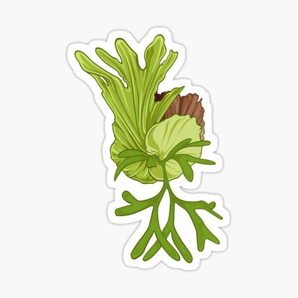 staghorn fern illustration - platycerium coronarium Sticker