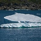 Iceberg off St. Anthony's, NL, Canada by Gerda Grice