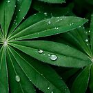 Droplets on Green by photolodico