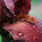 Oh Scarlet Iris Tongue, Tell Me Your Truth by photolodico