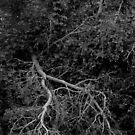 Gothic Deadwood Tree by photolodico