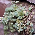 Succulents Against Brick by photolodico