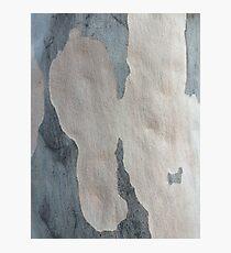 Australian design - Abstract Gum Tree Bark 2 Photographic Print