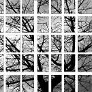 Pieces of Winter by Dan Algina