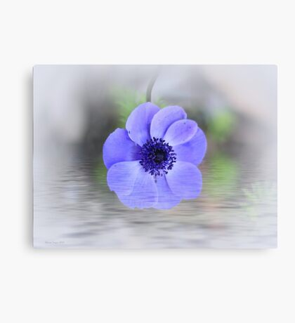Anemone Immersion Canvas Print