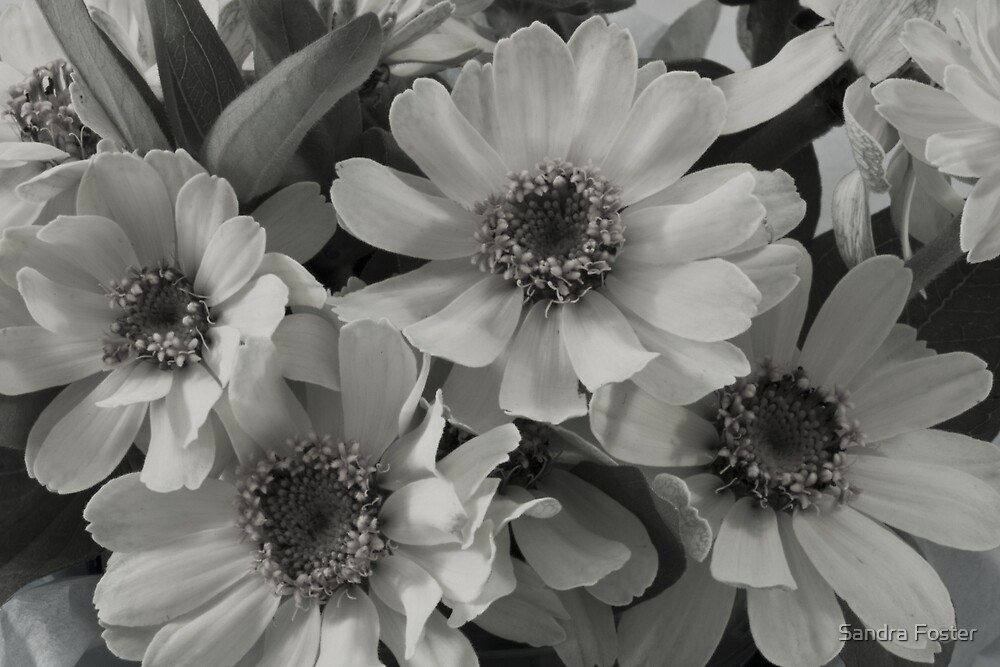 Yellow Brown Eyed Susan In Black And White  by Sandra Foster