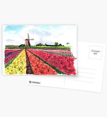 Holland flowers Postcards